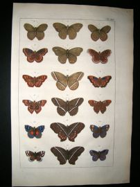Albertus Seba C1750 Folio Hand Coloured Antique Print. Butterflies 14